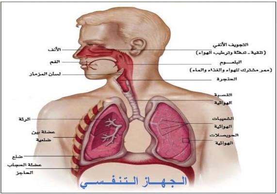 درس التنفس في مادة علوم الحياة والأرض لتلاميذ السنة الثالثة إعدادي الدورة 1
