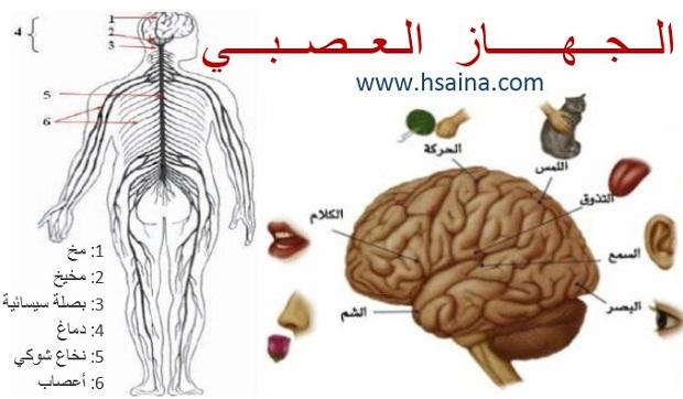 درس الجهاز العصبي في مادة علوم الحياة والأرض للسنة الثالثة إعدادي الدورة الثانية