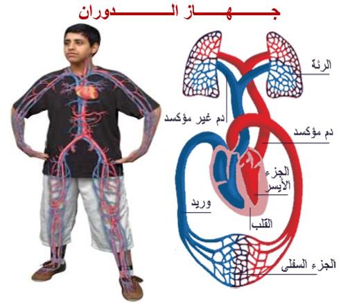 درس جهاز الدوران الدموي في مادة العلوم الطبيعية لتلاميذ السنة الثالثة إعدادي الدورة 1