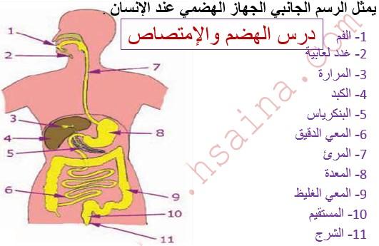 درس الهضم والإمتصاص Digestion et absorption في مادة علوم الحياة والأرض لتلاميذ السنة الثالثة إعدادي الدورة 1